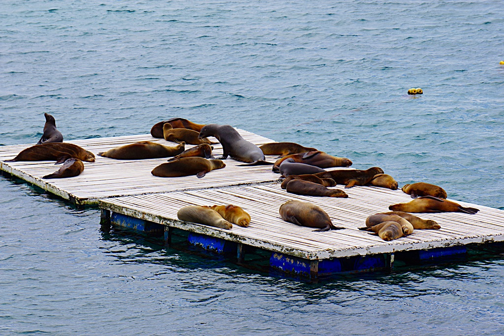 family oriented sea lions, Galapagos Islands