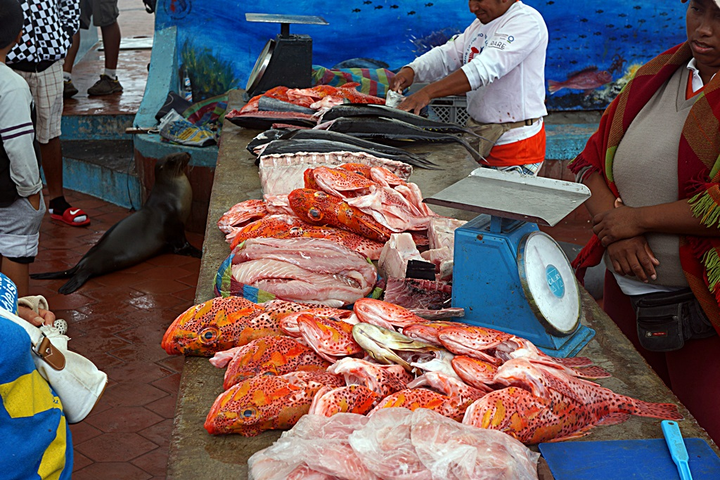 Galapagos Islands fish market