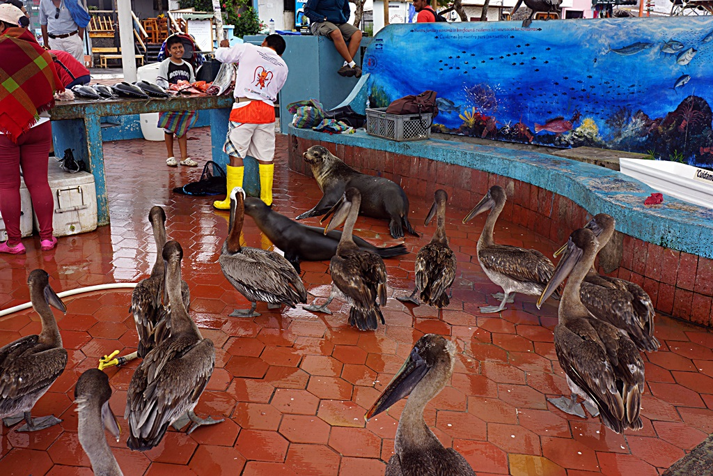 Seafood Market, Galapagos Islands