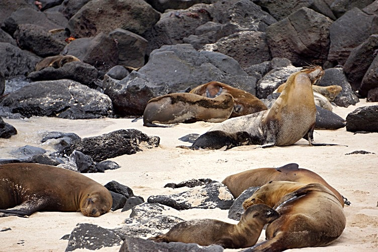 Sea Lions on san Cristobal Island Galapagos