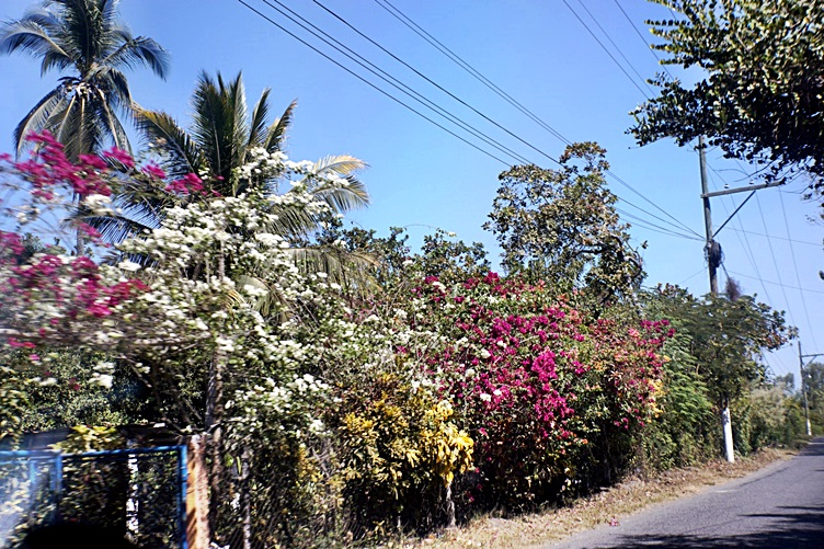 Flowers Everywhere, Monterrico Guatemala